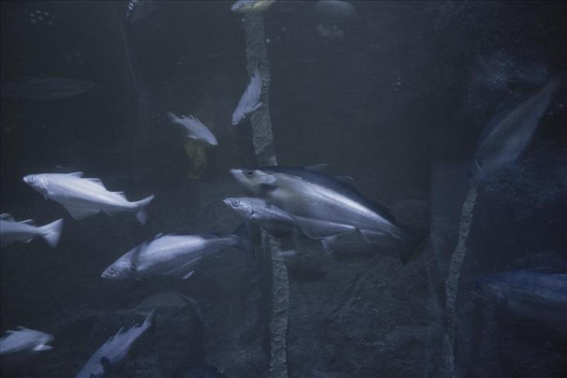 deep-sea101a.jpg